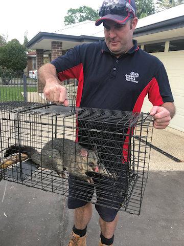 Possum Removal Hobart